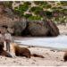 Pulau Kanguru, Australia