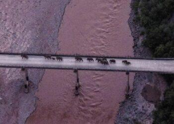 Foto dari udara yang diabadikan pada 8 Agustus 2021 ini menunjukkan kawanan gajah menyeberangi Sungai Yuanjiang di Provinsi Yunnan, China barat daya. (Xinhua)