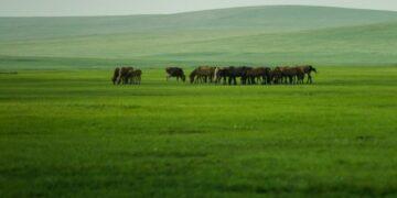 Foto yang diabadikan pada 22 Juli 2021 ini menunjukkan pemandangan musim panas Padang Rumput Wilayah Chenbarhu di Hulun Buir, Daerah Otonom Mongolia Dalam, China utara. (Xinhua/Lian Zhen)
